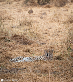 Kenya - 0753