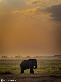 Kenya - 0073-HDR