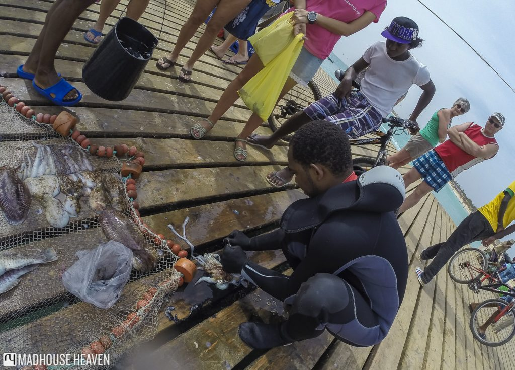Cape Verde diving blog sal santa maria pier free diver fisherman squid