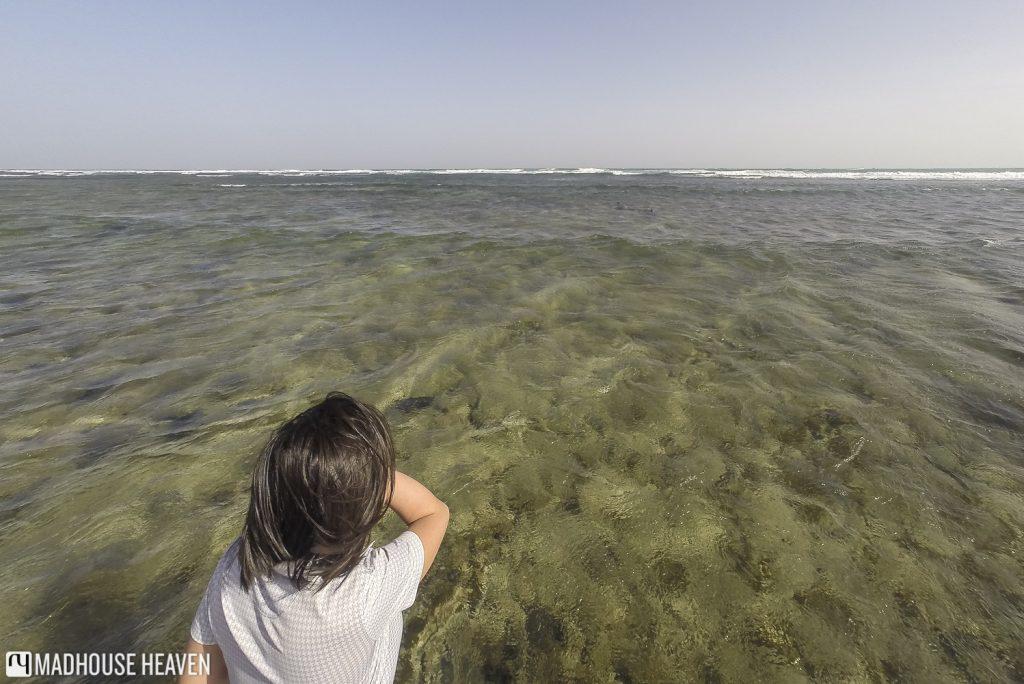 Cape Verde Sal Island Tour, lemon sharks, sharks bay, kite beach sal island, cape verde
