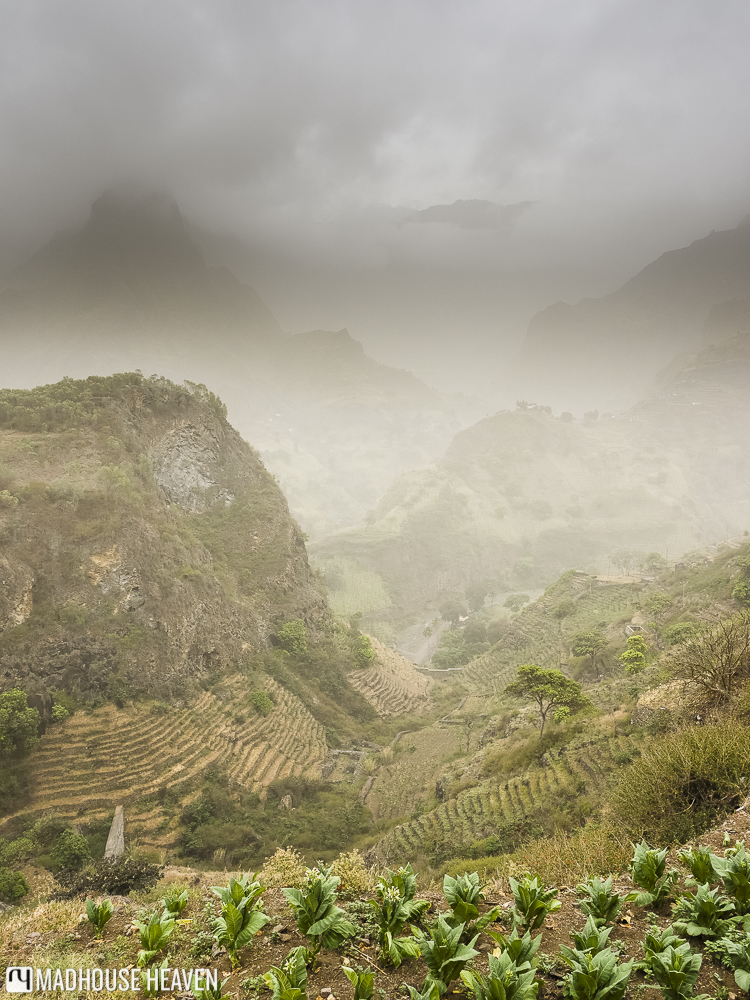 banana saplings being cultivated on the hiking route through The Three Valleys, Boca de João Afonso, Santo Antao
