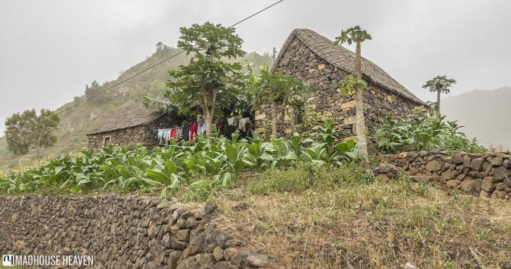 Stone house with a banana garden in The Three Valleys, chã de pedras, Santo Antao, Cape Verde