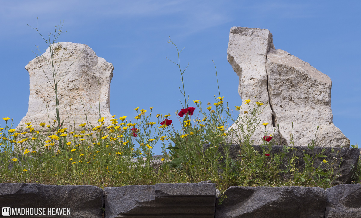 red poppies and daisies growing in ruins of Umm Qais, jordan tipping and bargaining
