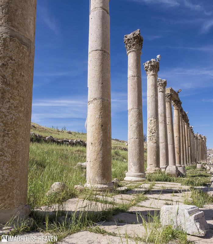 visiting jerash jordan, Street of Columns, forum Cardo