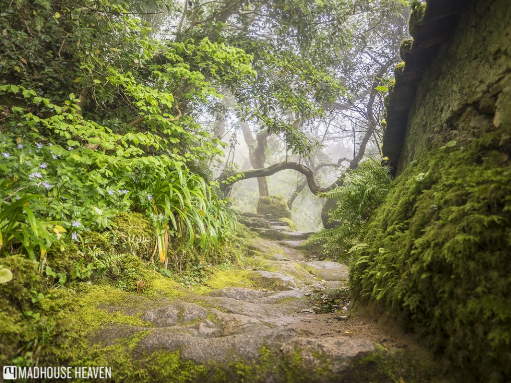 Enchanted forest path, Overgrown trees, Convent of the Capuchos, sintra, portugal