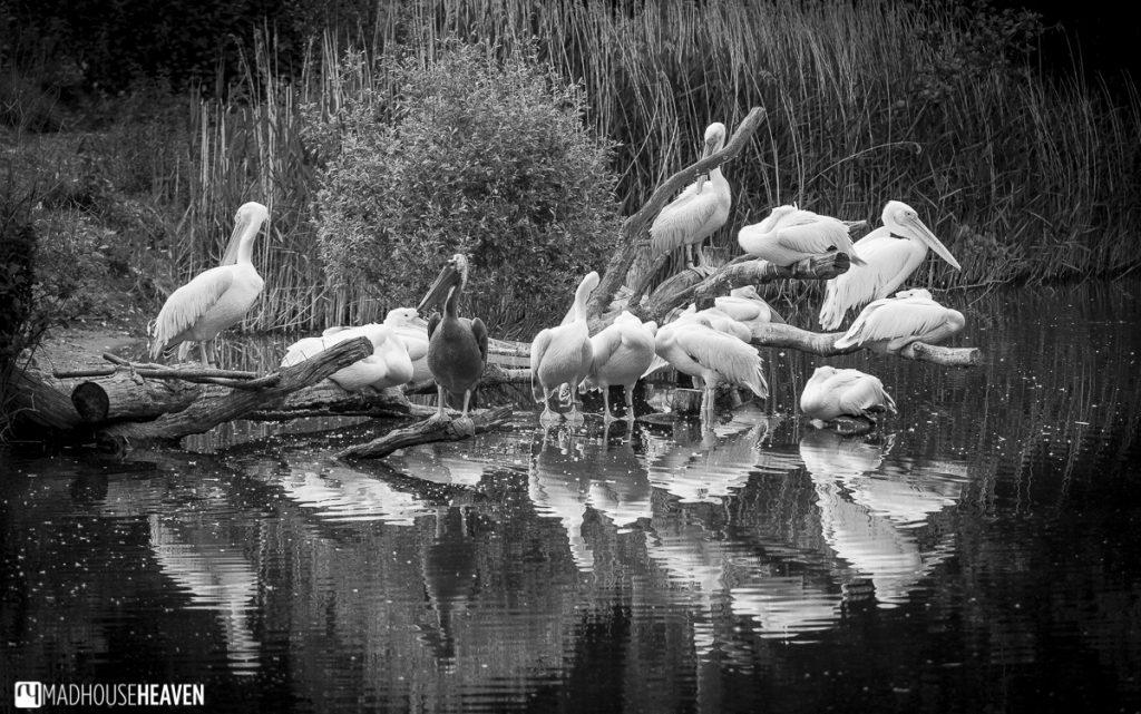 Beekse Bergen Safari Park Review