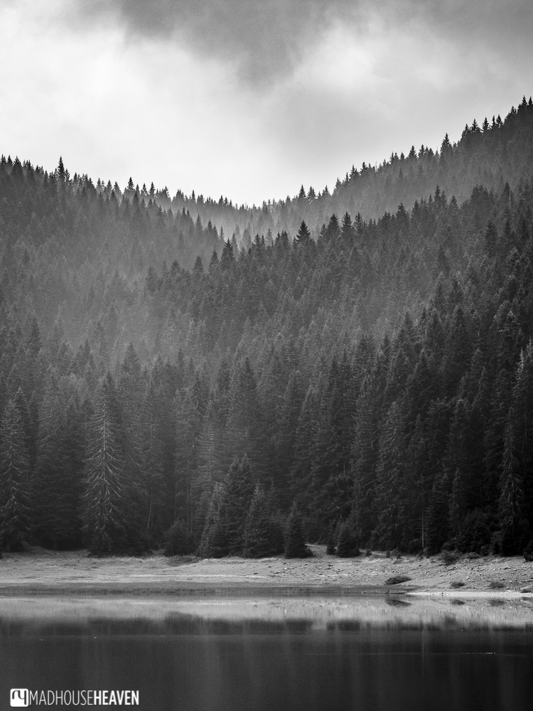 Fog dissipating over the treetops on a misty morning in Durmitor National Park, Montenegro.