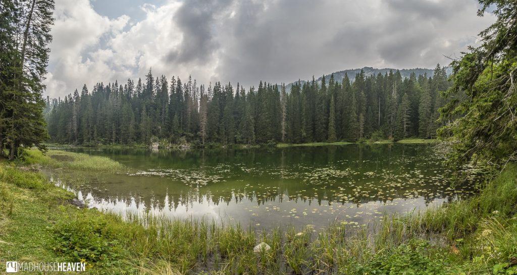 Zmijinje Jezero, a small, secret caldera lake hidden in the park, its perimeter covered in pine trees in Durmitor National Park