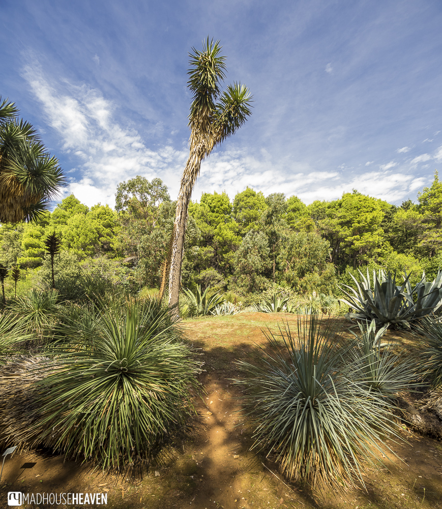 lokrum, island of love, botanical garden