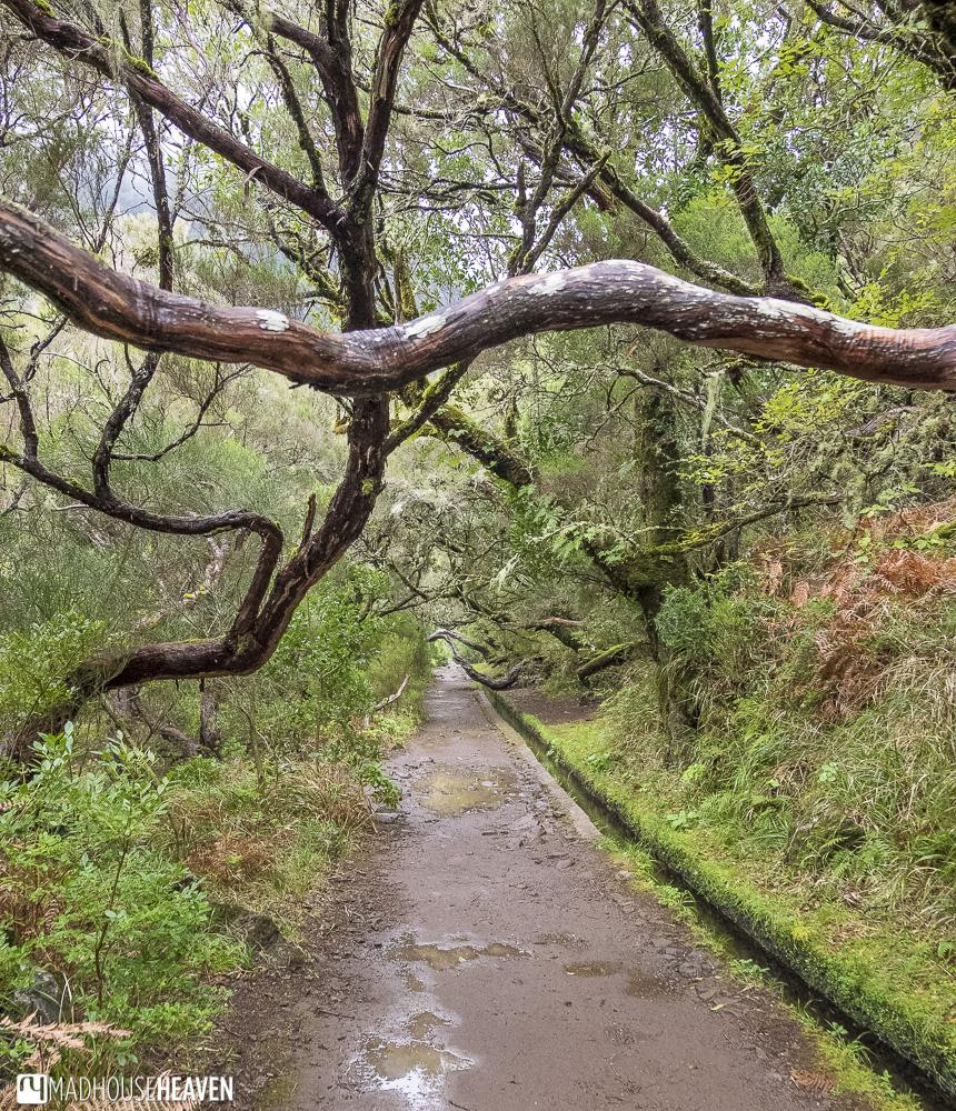 levada walks madeira
