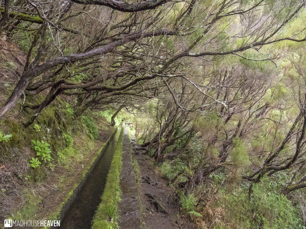 levada walks madeira tree tunnel forest