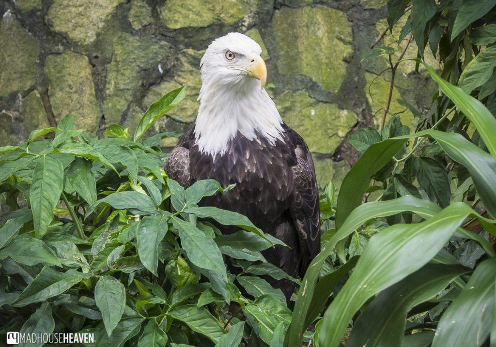 River Safari, Jurong Birdpark and the Night Safari