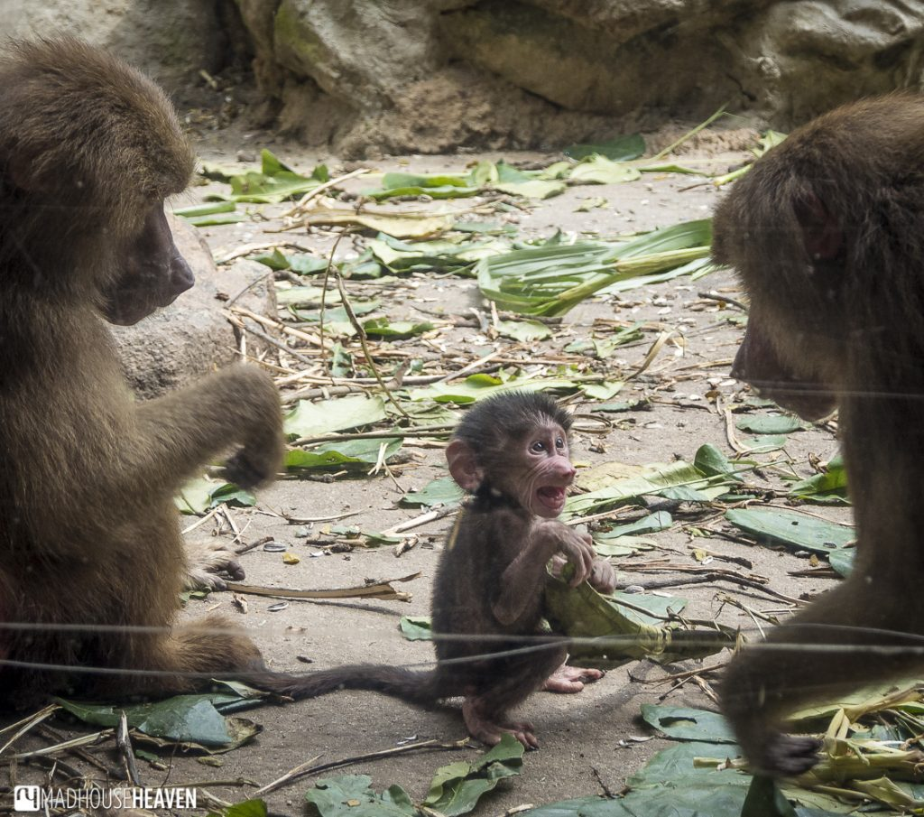 Animals in the Singapore Zoo