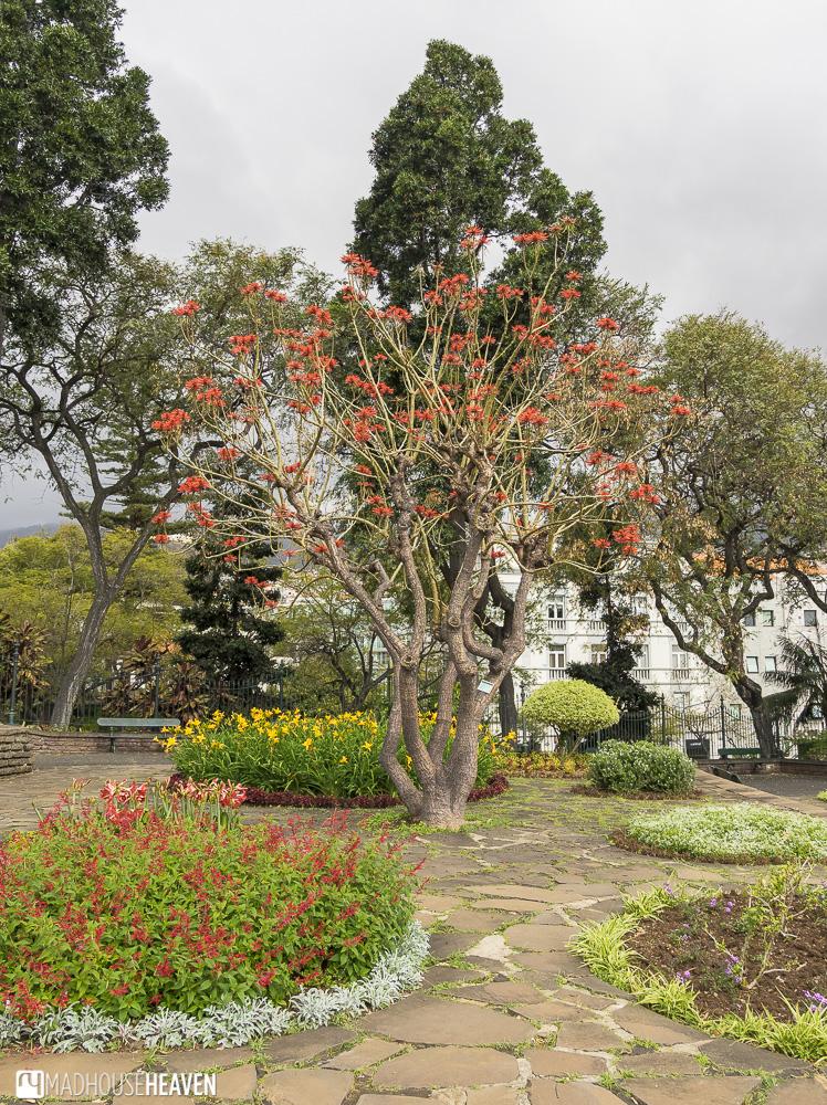 funchal city gardens