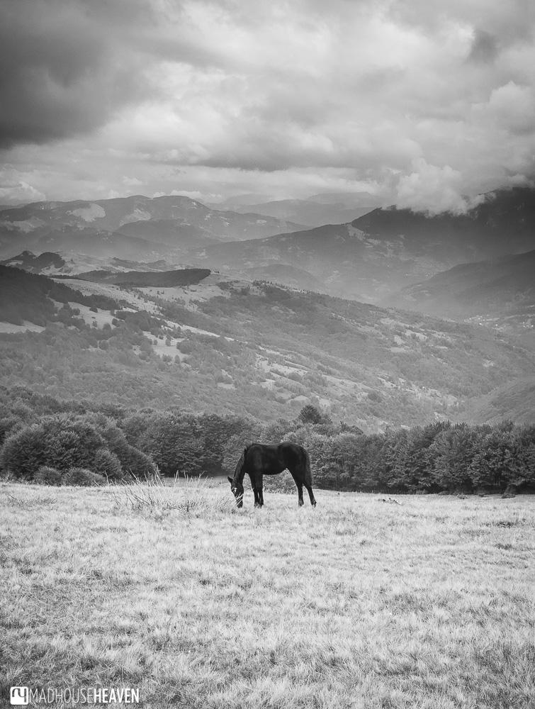 foal on komovi mountain, montenegro