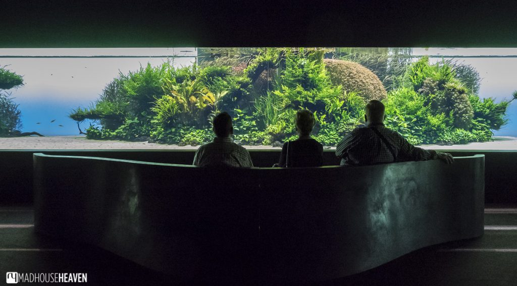 Visitors viewing the Forest Underwater by Takeshi Amano exhibition at Lisbon Oceanarium