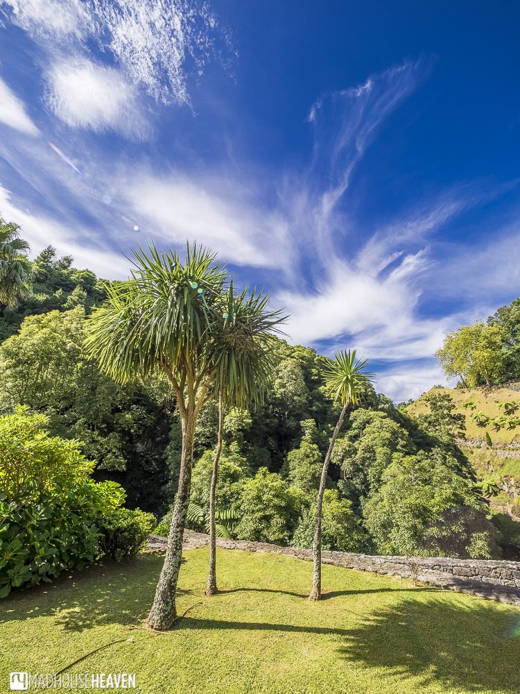Palm trees and blue skies on the island of Sao Miguel, The Azores