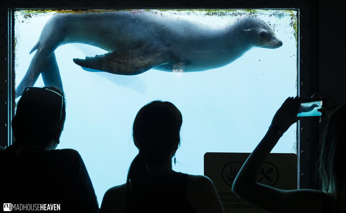 seal sea lion water mammal zoo park barcelona pool