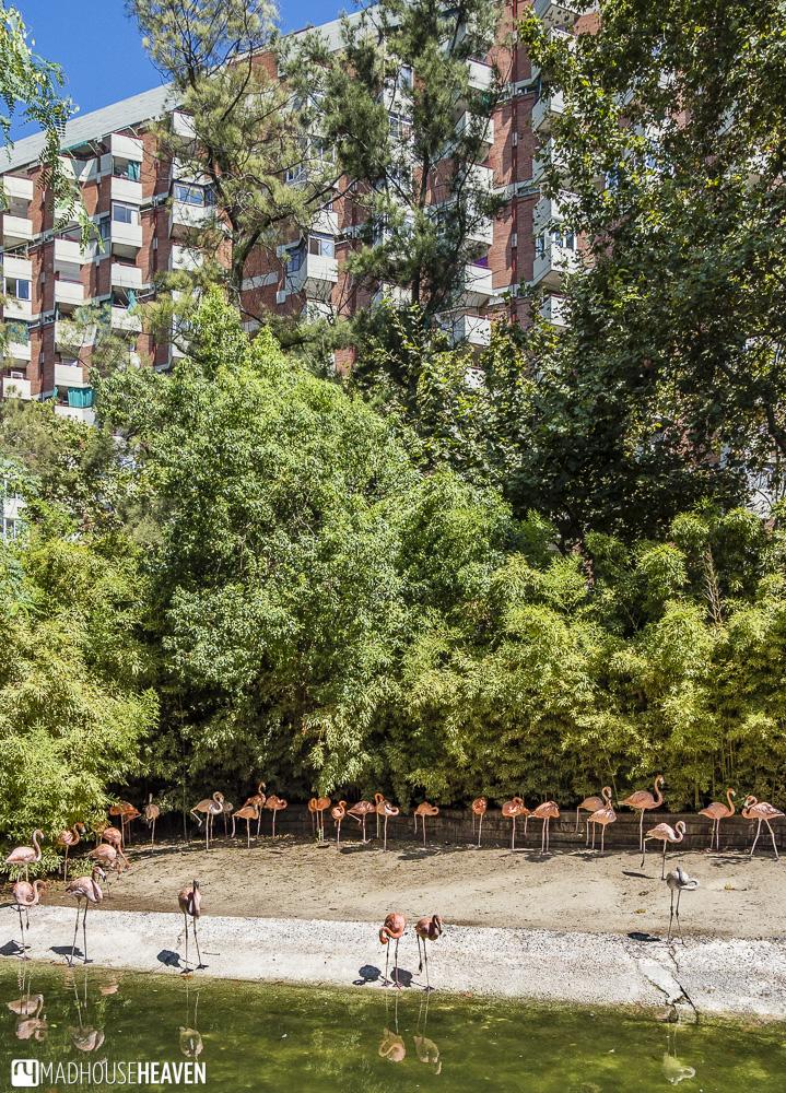 bird pink flamingo water building barcelona zoo park