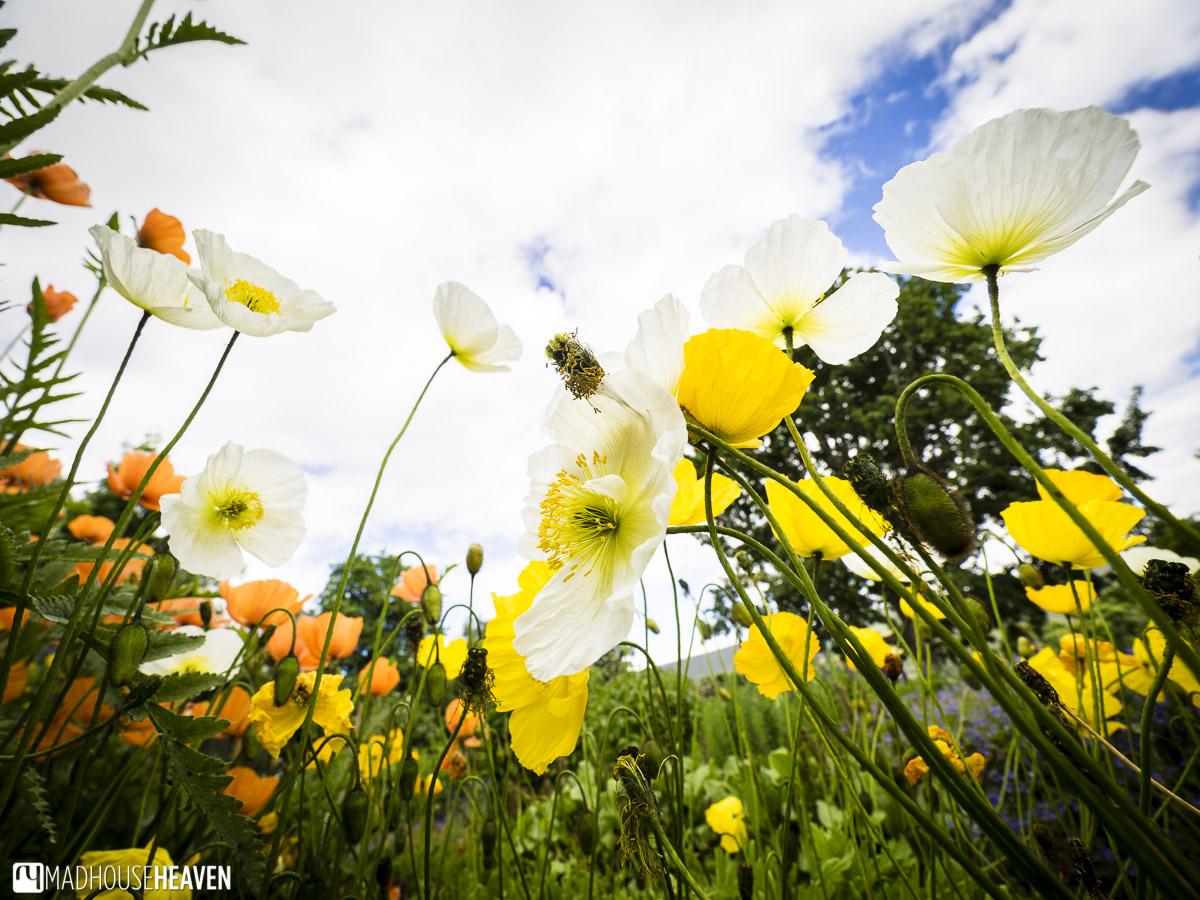 Iceland, Akureyri, Botanical gardens