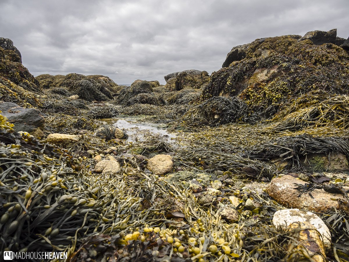Coral beach Ireland looking out on the Atlantic ocean, a seaweed garden