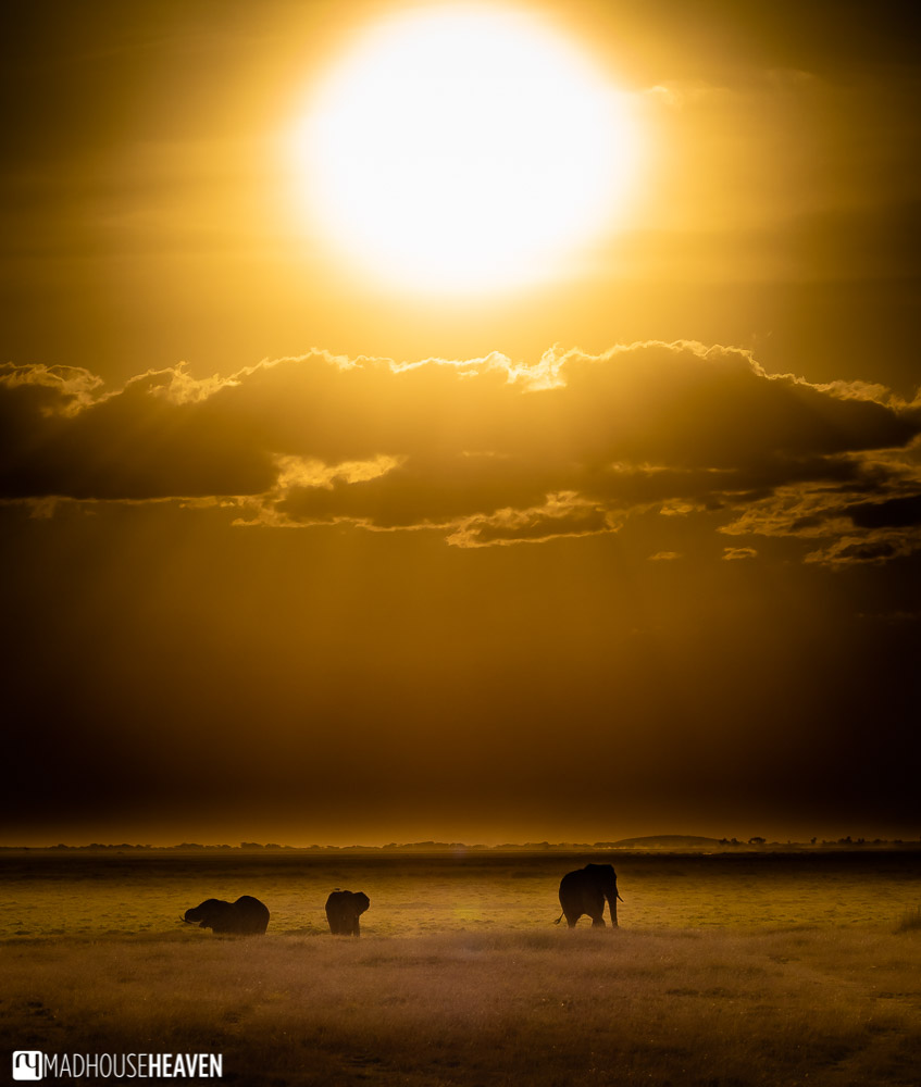 Group of elephants silhouetted against the fiery sun of the African sunset in Amboseli