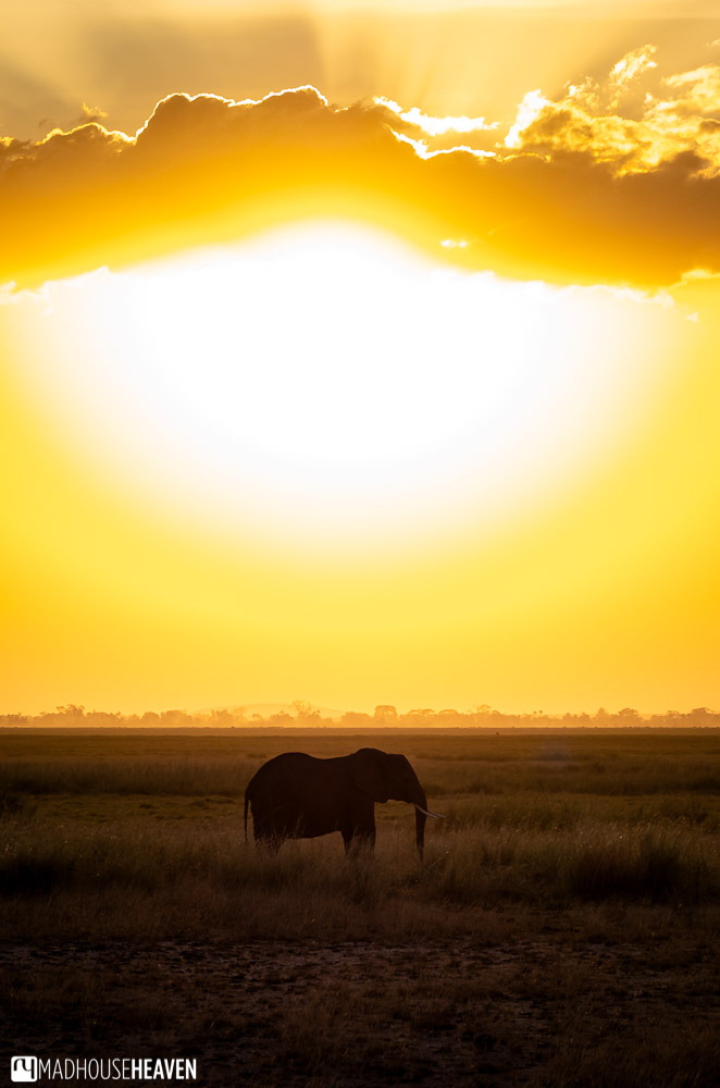 Giant fiery ball of the setting sun and a lone elephant on the plains of Amboseli