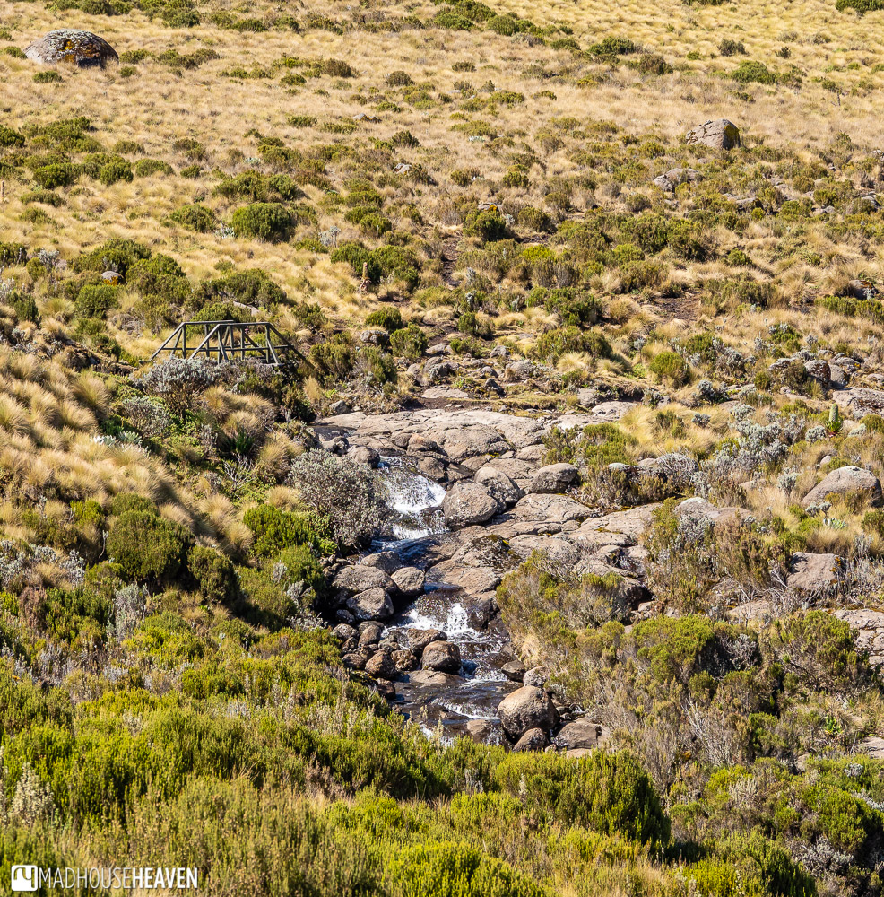 Tiny wooden bridge leads across one of the countless streams that seem to flow down every crevice on this side of Mount Kenya