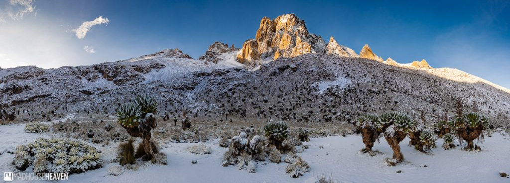 Shrubs and snow cover the slopes of Mount Kenya