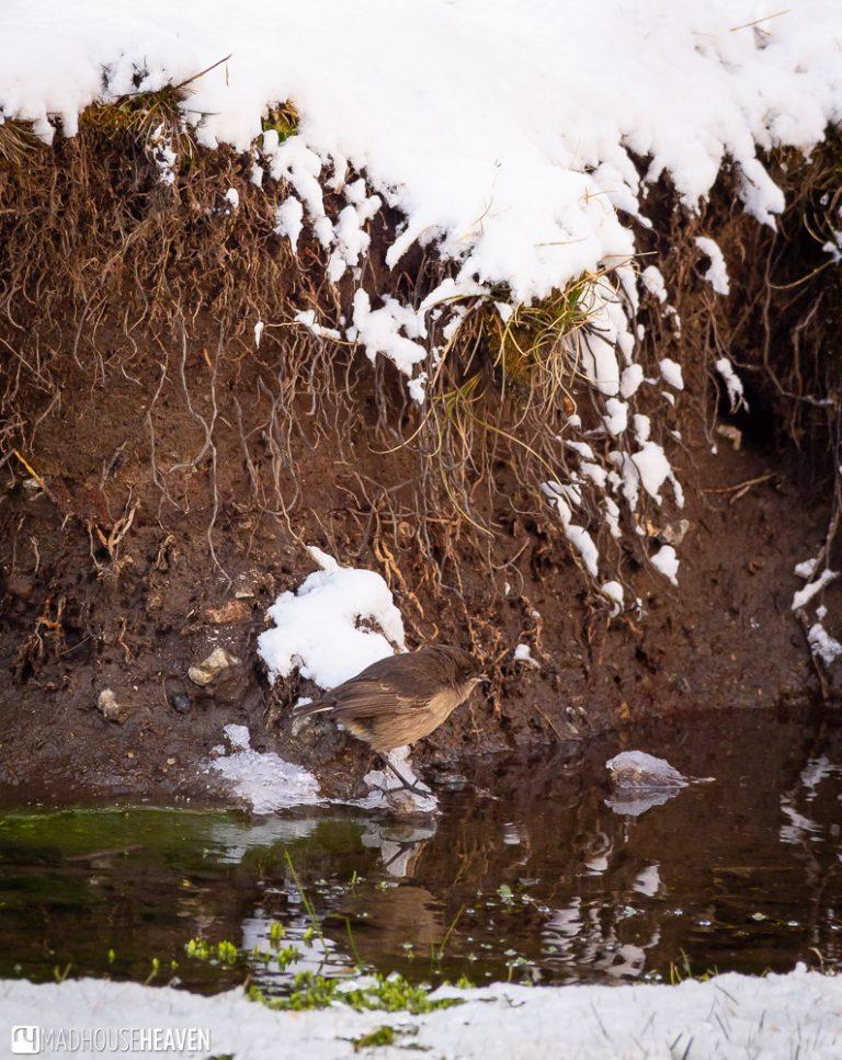 Little bird near a snow covered pond