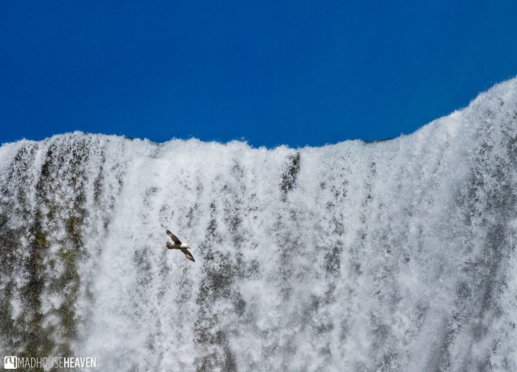 A lone seagull flying close to the rim of the Skógafoss Waterfall