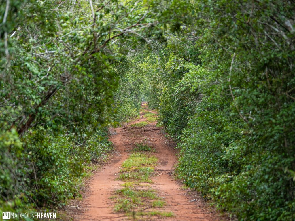 Dirt Path Leading through the Arabuko Sokoke Forest, Kenya