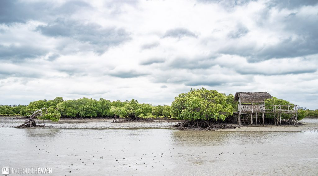 Observation Deck at the Edge of the Mangrove Forest, Mida Creek, Kenya
