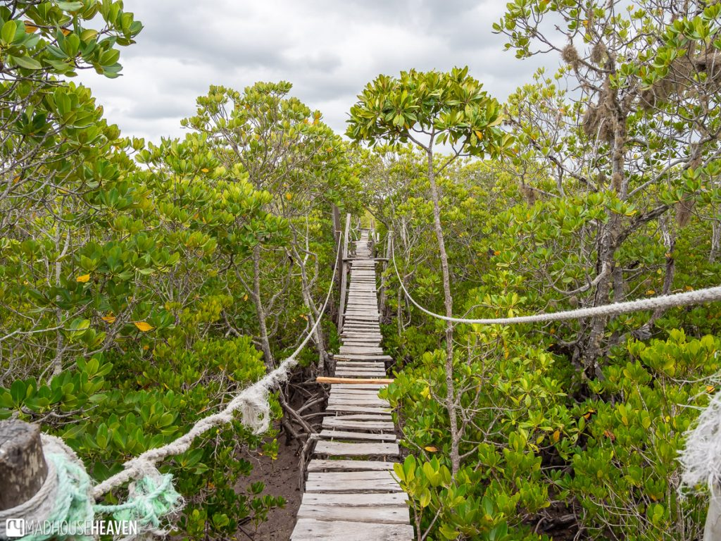 Mangrove Boardwalk in Mida Creek, Kenya