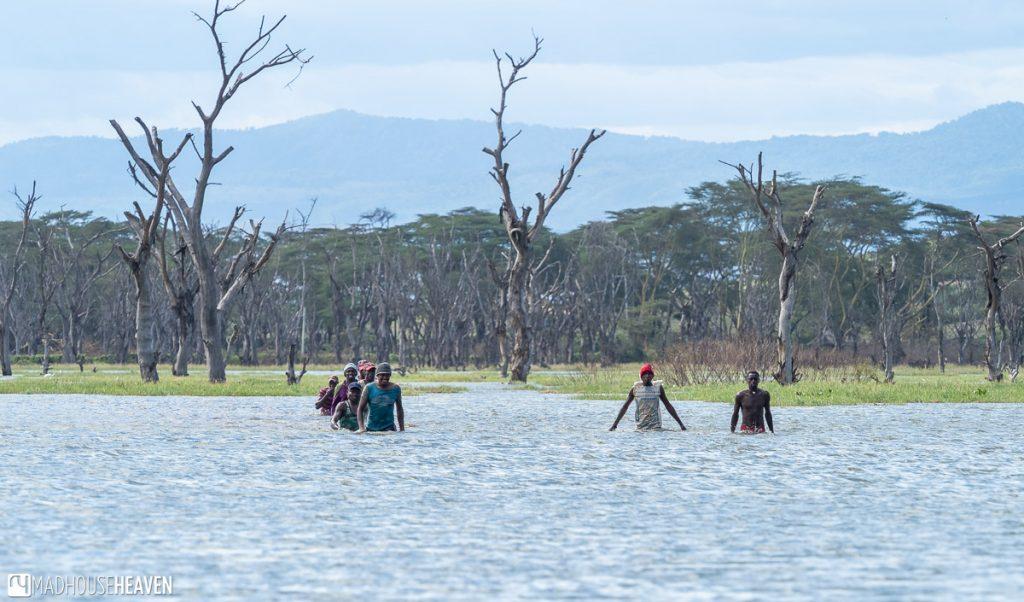 A group of fishermen walking though the shallow water of Lake Naivasha