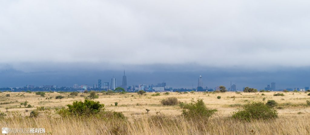 Nairobi Skyline, on an overcast day, providing a backdrop to the Nairobi National Park grounds
