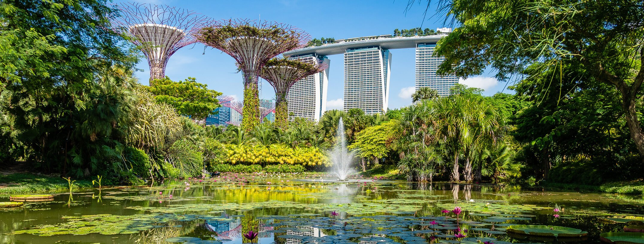 super trees of gardens by the bay and the lily pond frame marina bay sands in singapore
