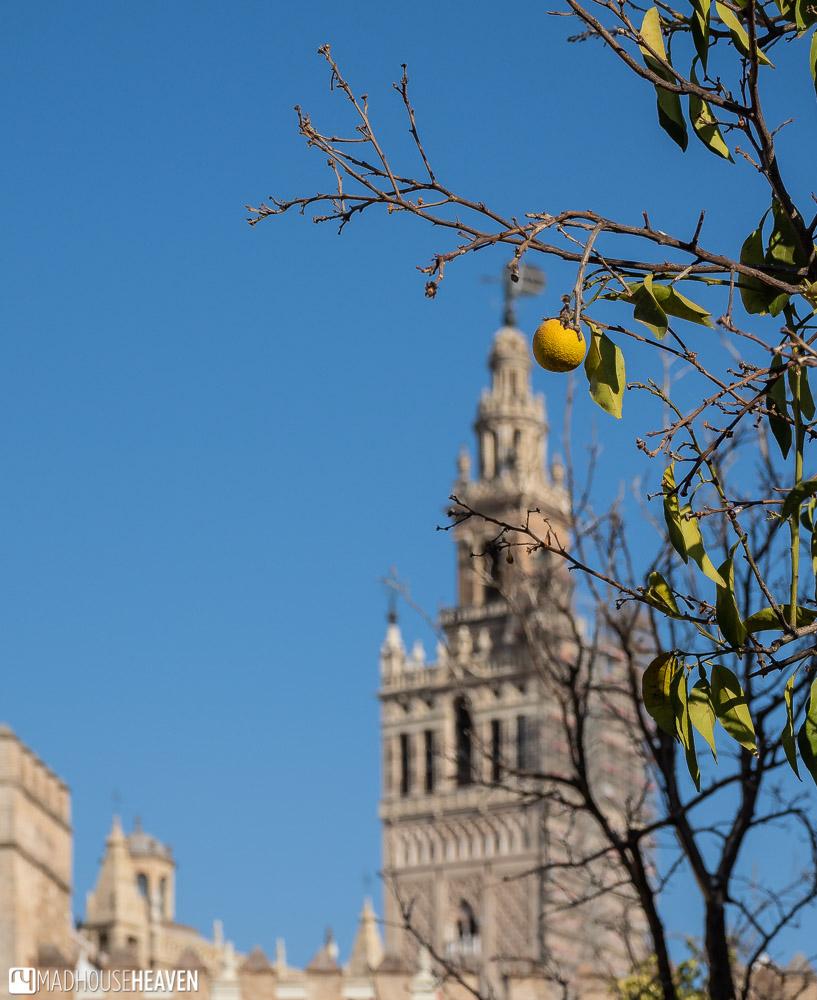 Giralda Tower seen through the branches of an orange tree
