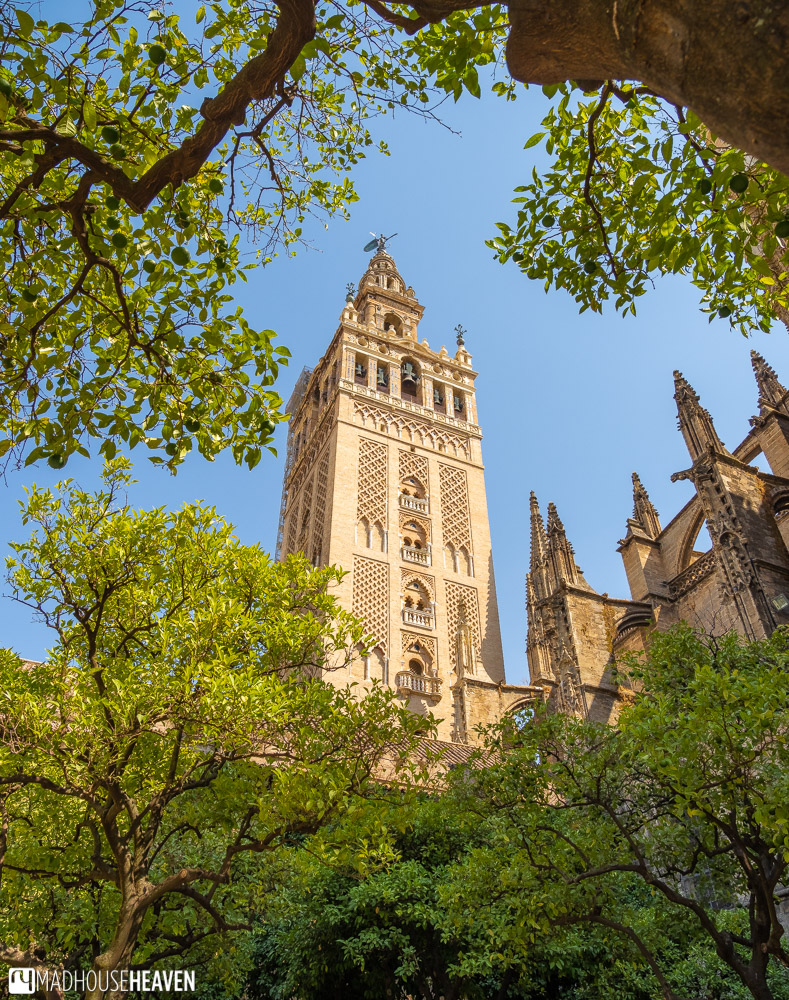 The Giralda Tower seen from between the orange trees that line the Seville Cathedral's courtyard