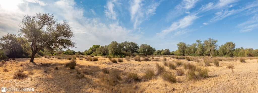 The dry southern Spanish landscape in the Doñana National Park under the heat of summer