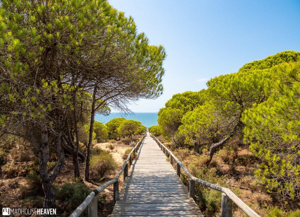 Raised wooden walkway in the Matalascañas Dunes