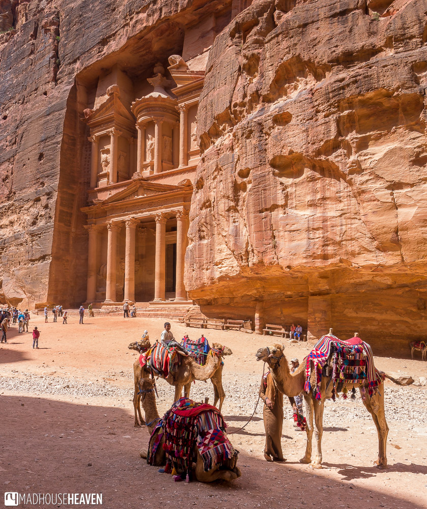 Colourfully dressed and harnessed Bedouin camels in front of the Treasury