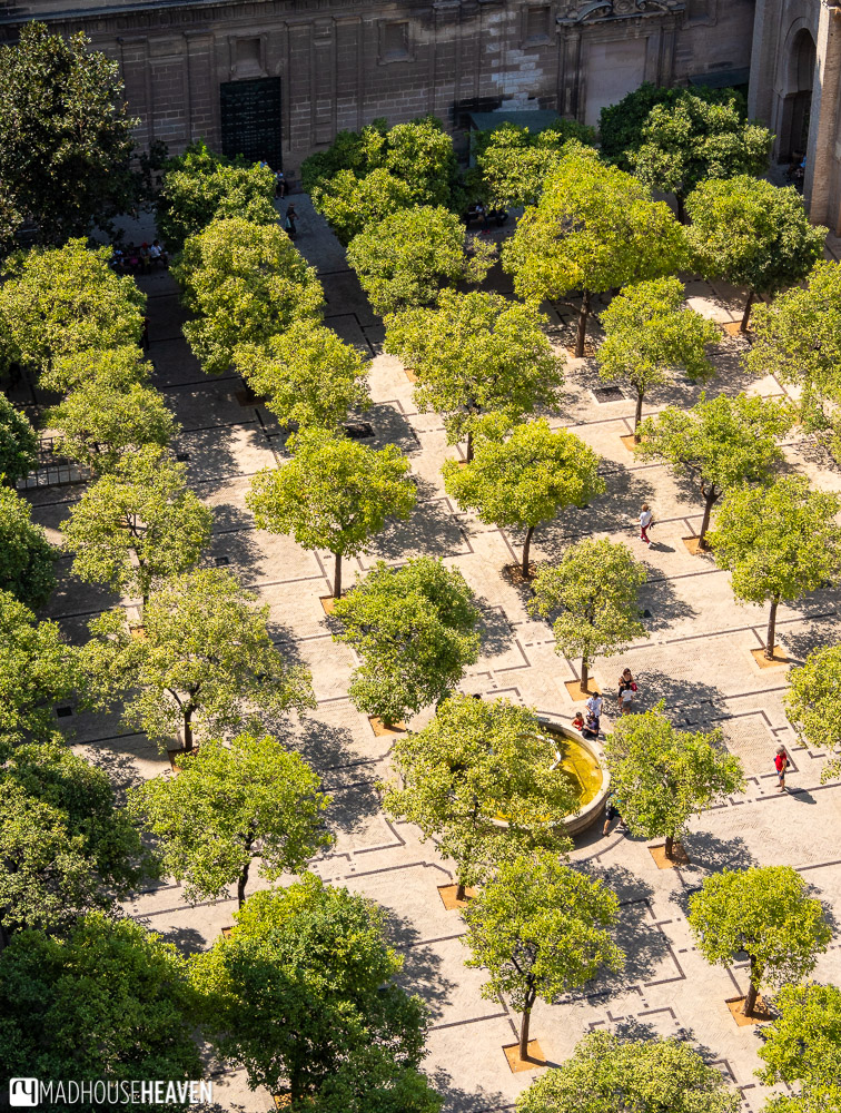 Orange trees are planted in a regular pattern in the Seville Cathedral's courtyard, with a fountain at its centre