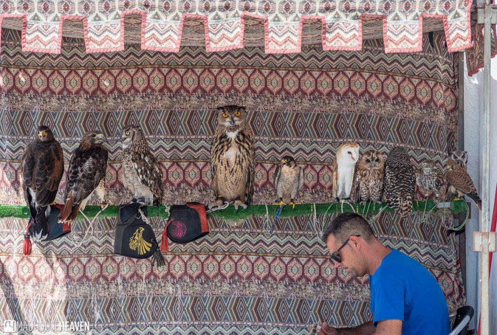 A number of birds of prey in Balcony New Peña, in Arcos de la Frontera