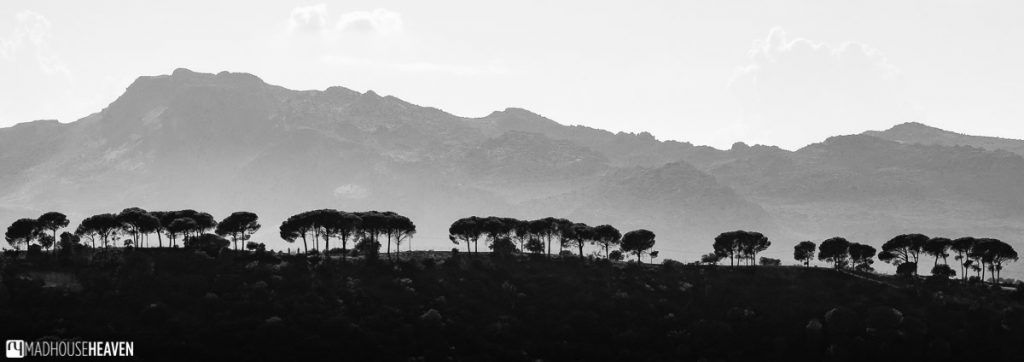 Black and white image of a line of trees on one of the ridges criss-crossing the expansive Andalusian countryside