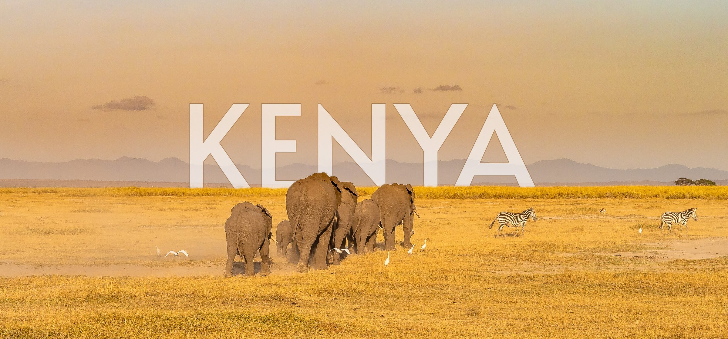 elephants walking into the horizon in Kenya, Nairobi National Park