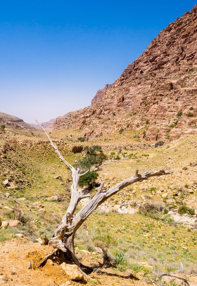 Dry Tree in Dana Valley, Jordan