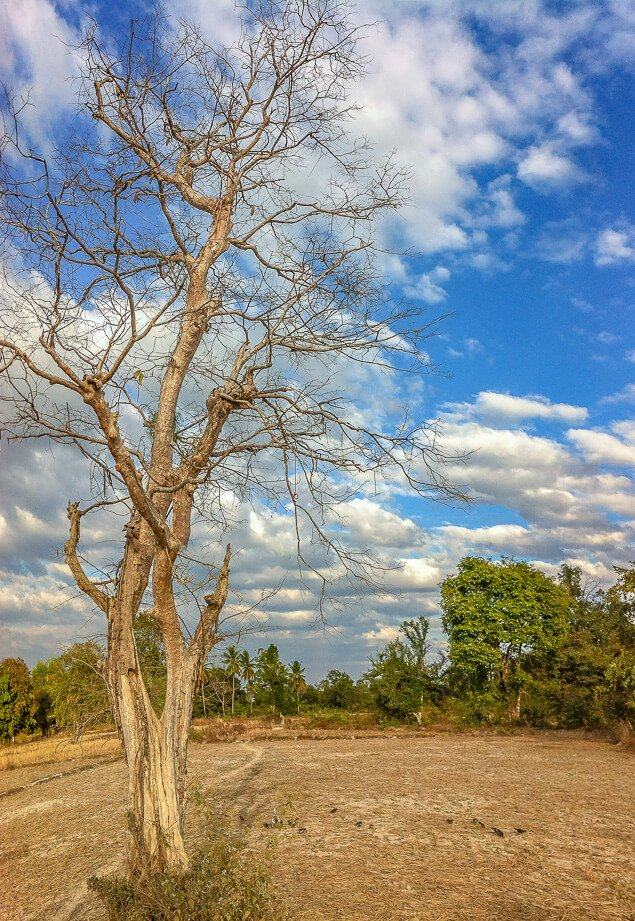 Lone Tree, Si Phan Don, Laos
