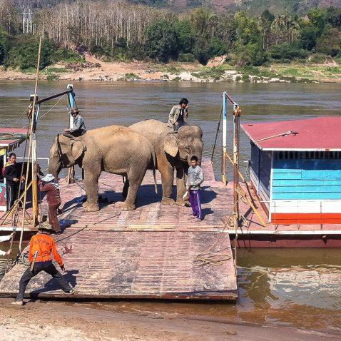 Elephants on a Barge, Mekong River, Laos