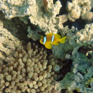 Scuba Diving - Aqaba, Jordan